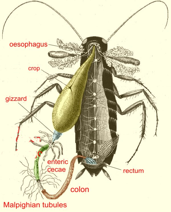 Mic uk cockroaches parasites 3 001 title image ccuart Gallery