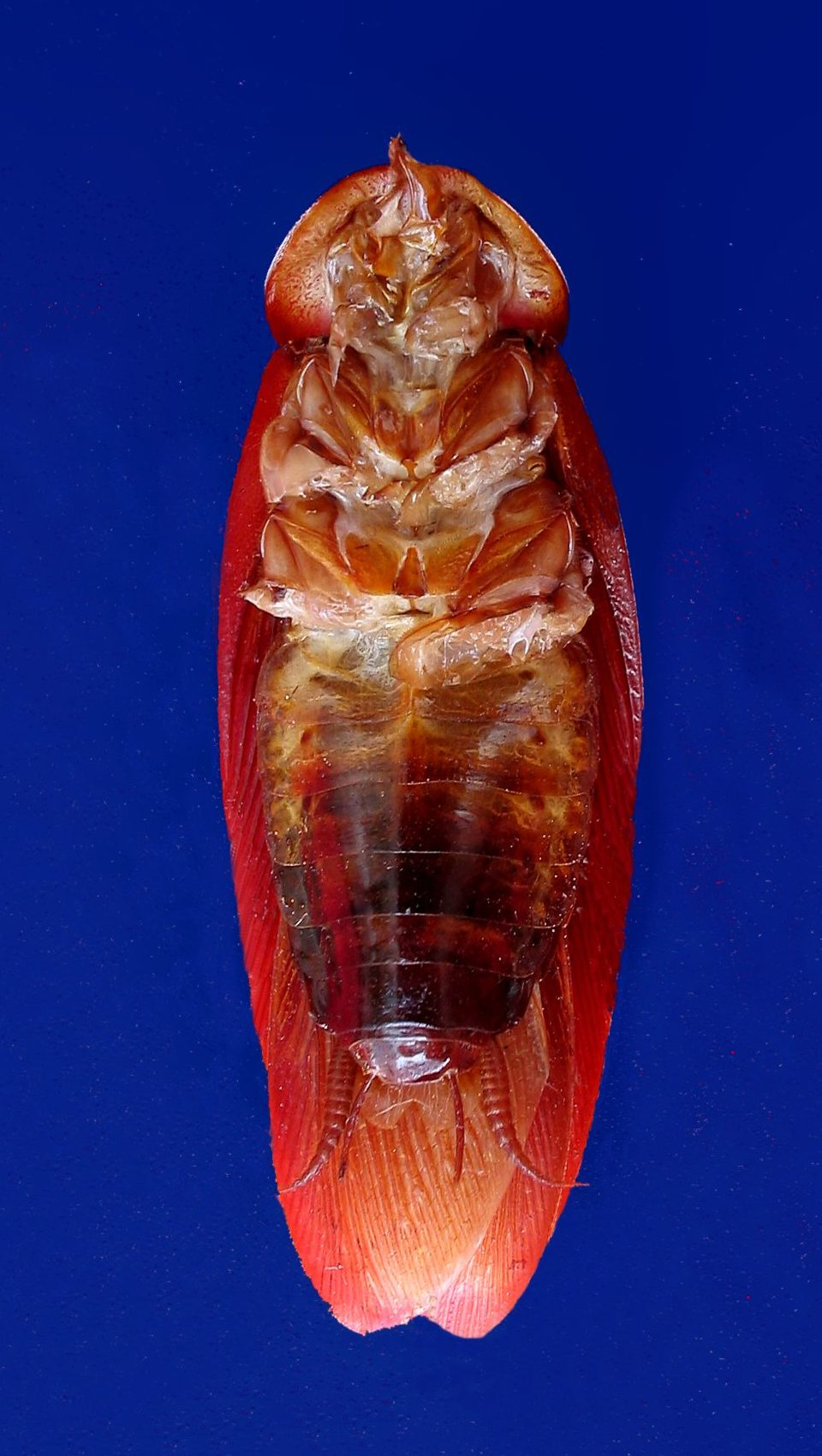 Literature review on intestinal parasites of man