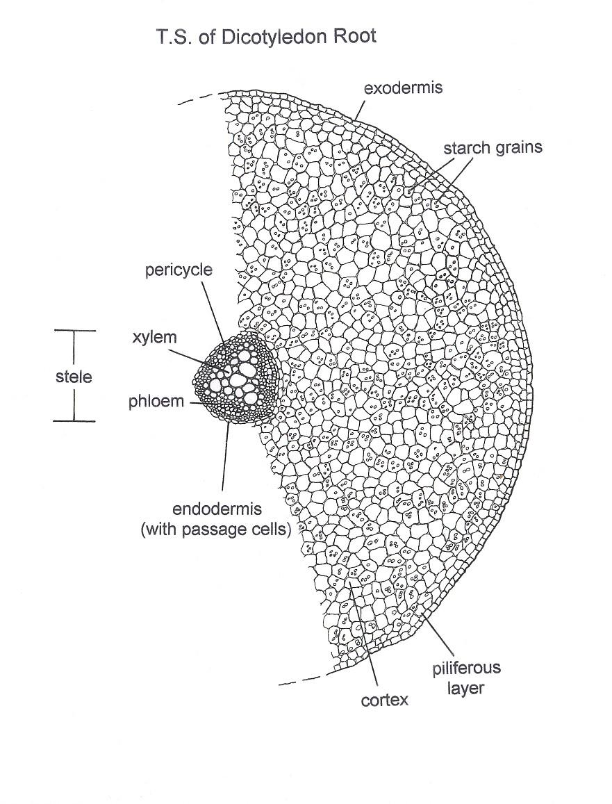 Index of magimgdec02 dicotg pooptronica