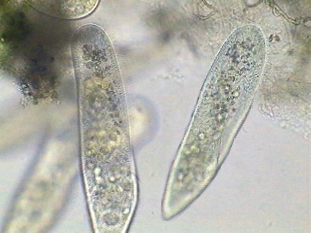 biology hw: January 2009