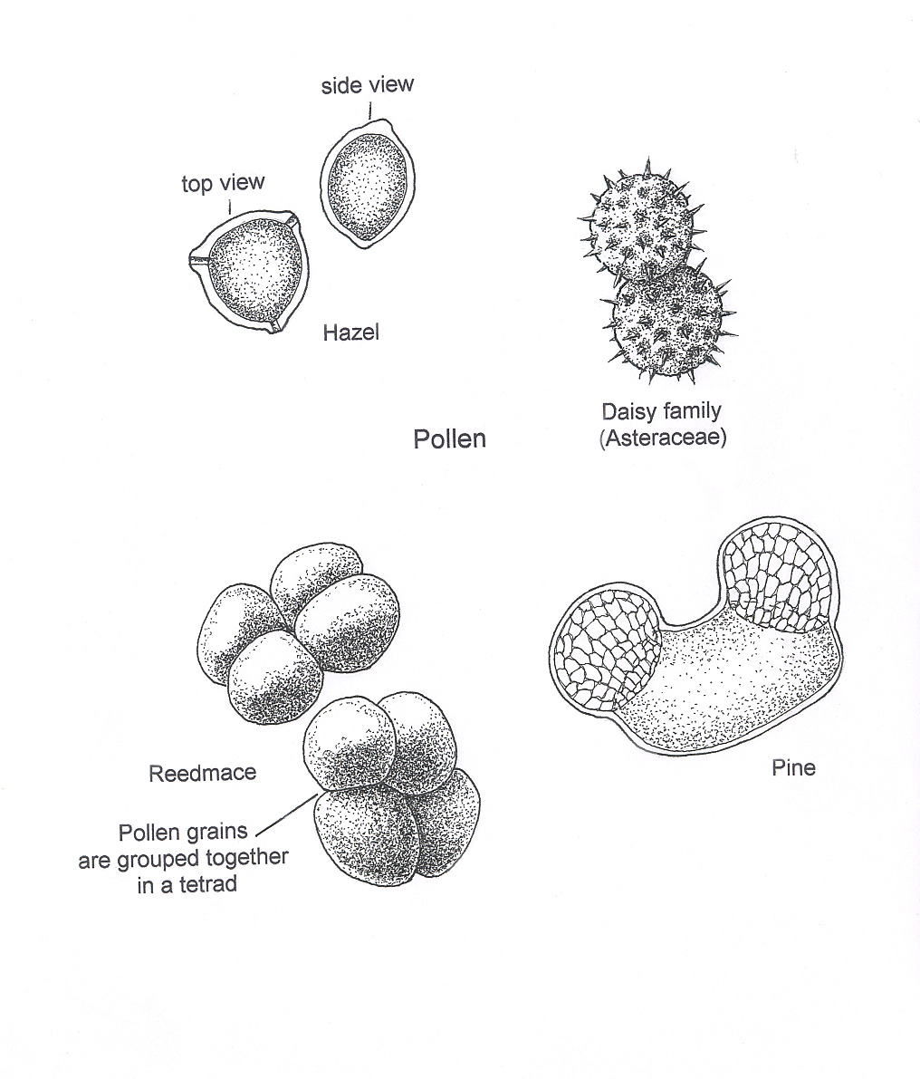Flower Pollen Microscope Pollen Flower Pollen Microscope