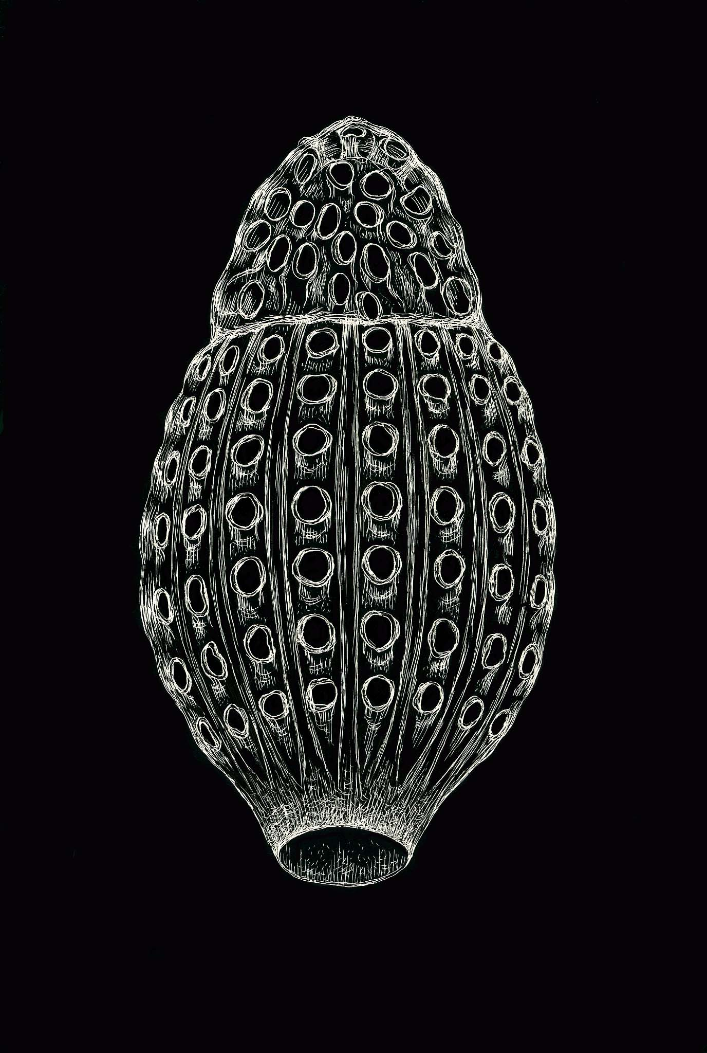 geometry and pattern in nature 3 the holes in radiolarian