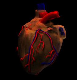 Human Heart Animation