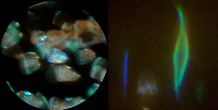 http://www.microscopy-uk.org.uk/mag/imgmar10/JW_wat10.jpg