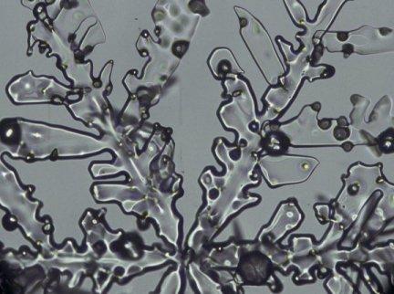 http://www.microscopy-uk.org.uk/mag/imgmay01/r13b02.jpg