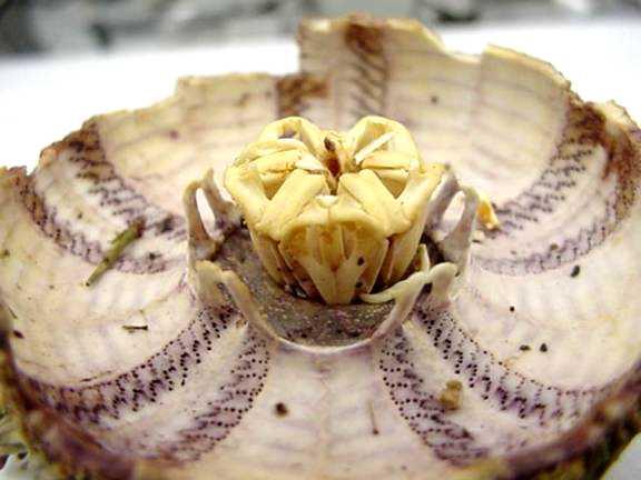 Sea Urchins, A Testy Subject by Ronald L. Shimek, Ph.D ...