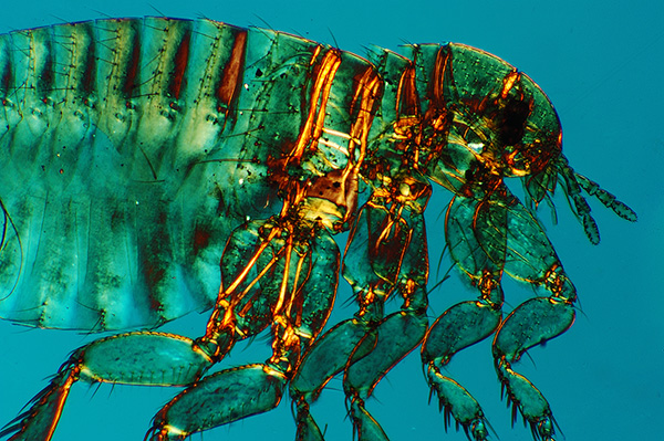 Animals with exoskeletons explained – How It Works |Examples Of Exoskeleton Animals