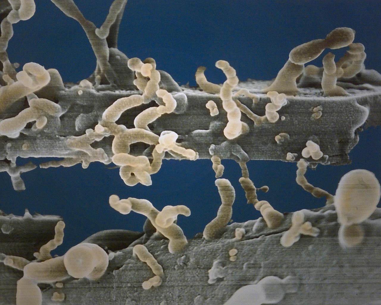 www.microscopy-uk.org.uk
